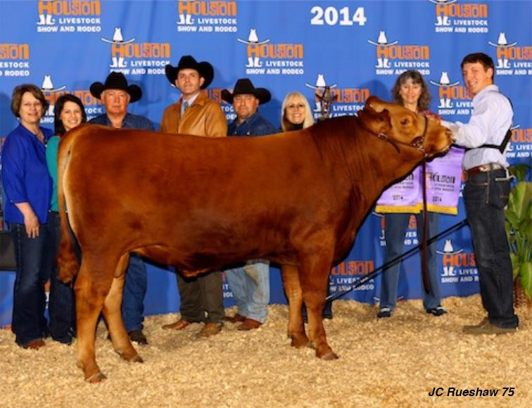 2014 Houston Livestock Show Grand Champion Red Wagyu Bull