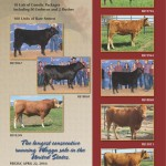 115 Lots Of Premium Wagyu Genetics Featured At The Upcoming Steaks Are High Sale In Salado, Texas